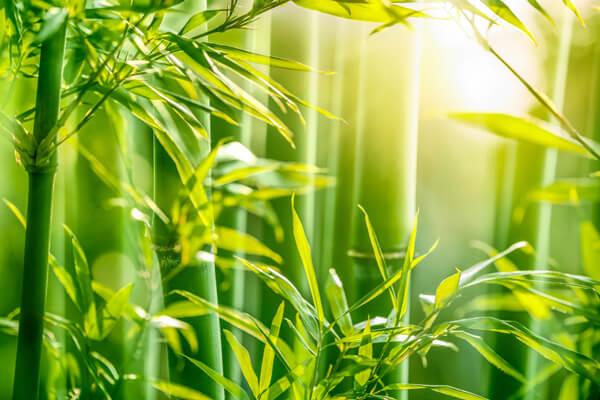 vải bamboo được làm từ cây tre